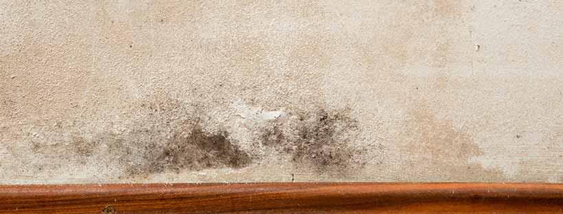 schimmel verwijderen klusjesdienst spiritus voor al uw klussen. Black Bedroom Furniture Sets. Home Design Ideas